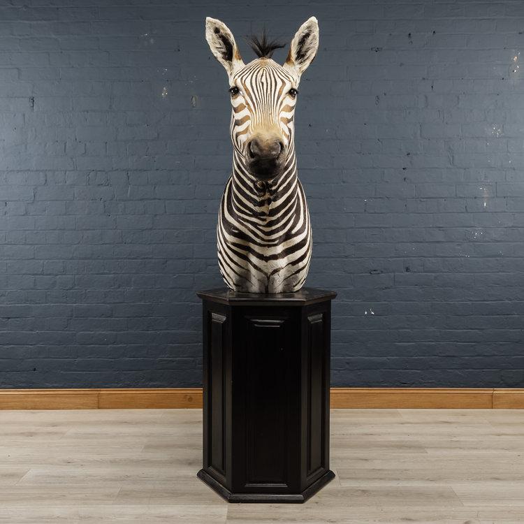 Zebra+Bust+One-11