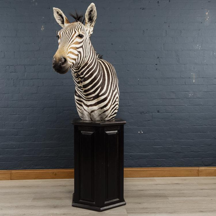 Zebra+Bust+One-2