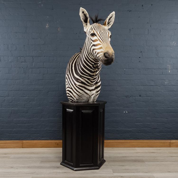 Zebra+Bust+One-6